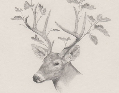 Dibujos 6 / Drawings 6