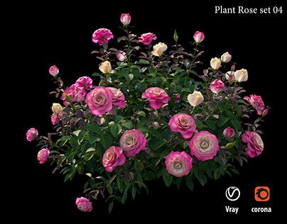 Rose Plant set 04