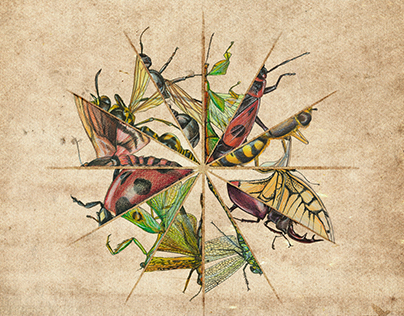 """Calendar Series of """"Biology. Insects"""""""