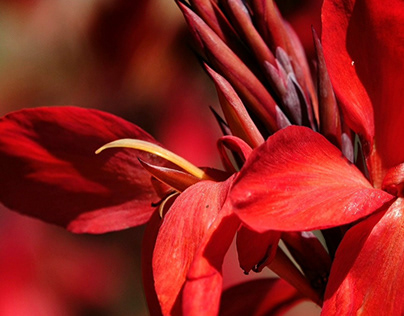 Head Over Heels ~The Color Red