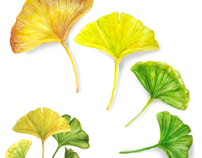 Botanical Illustration Projects