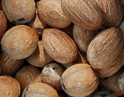 Coconut and hazelnut renders