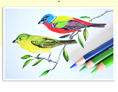 ilustración científica: Técnica, colores con trementina