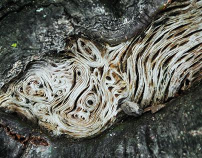 Wooden Fingerprints | Photo Series