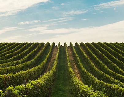 Vineyard Details - Photography