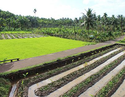 Village Beauty of Kerala