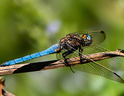 🦋 Dragonfly 🐲