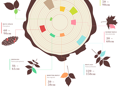 healthy trees : infographic
