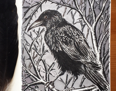Crow in the hedge