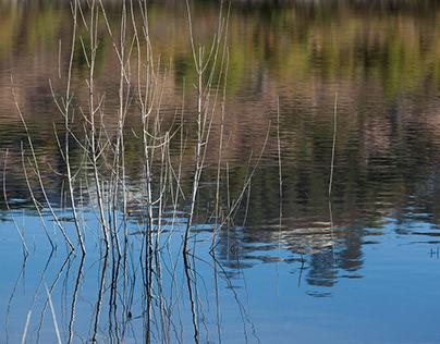 Lake Hodges Walk
