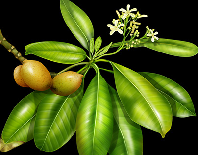 Tropical plants of the Marshall Islands