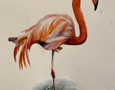 Flamingo Watercolor illustration