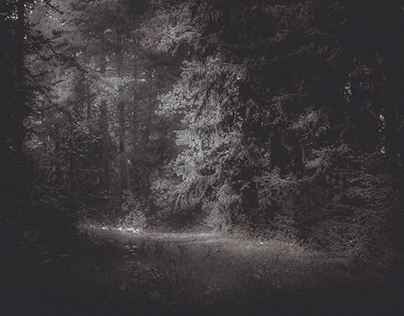 Dark Nature IV