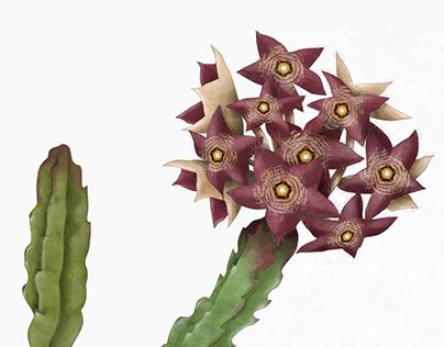 Botanical illustration. Scientific plants illustration