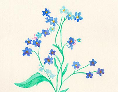 Herbario de Flores