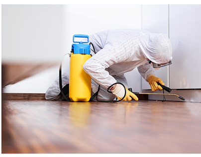 Pest Control service in Vancouver