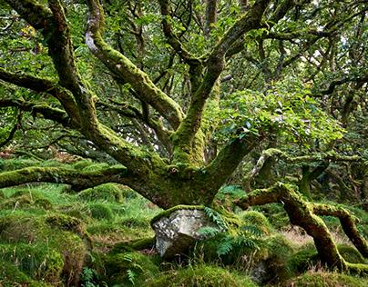 Ancient Woodland #1