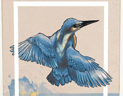Is it the Kingfisher?