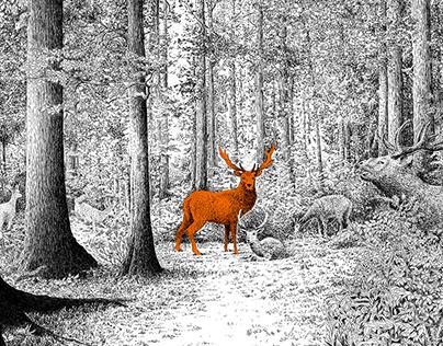 Deer, doe & fawn. Cerf, biche & faon