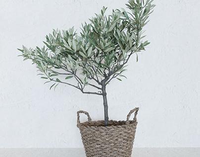 3d model olive tree in a basket.