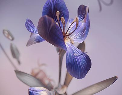 Iris germanica ||| Botanical Illustration |||