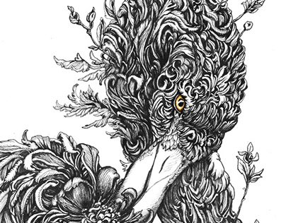 Animal Illustrations Vol 1