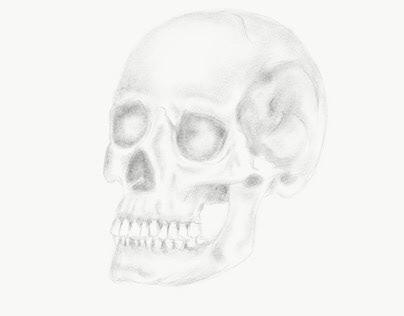 Human Skull Pencil Shading