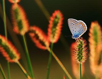 Insects - Žuželke