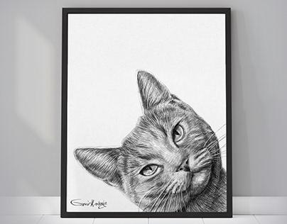 Peekaboo Pet Portraits