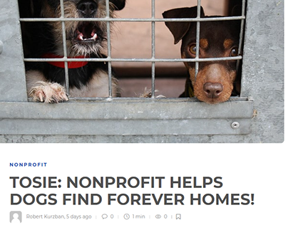 TOSIE: NONPROFIT HELPS DOGS FIND FOREVER HOMES!
