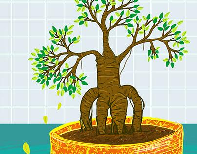 my new bonsai tree