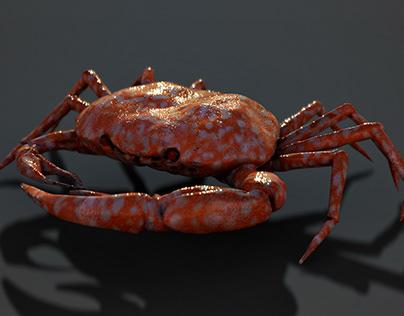 3D Crab