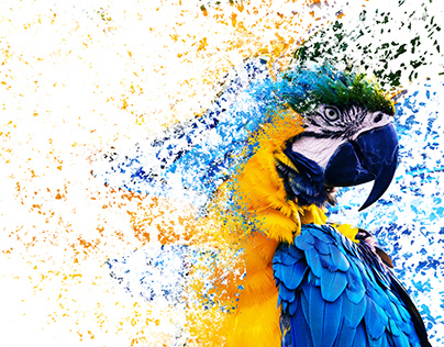 Photoshop Discovery: Parrot The Carrot