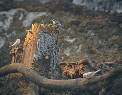 Teeny-Weeny Sparrows