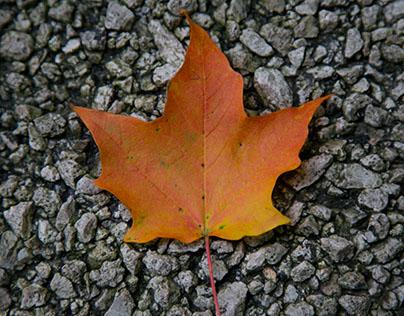 Autumnal Adventures