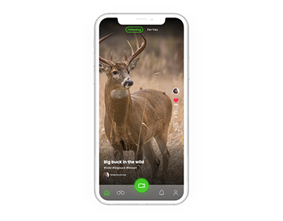 TikTok for WildLife Video and Photography