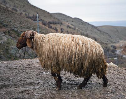 A Kurdish Village