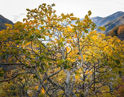 I caldi colori dell'autunno