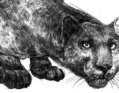 Infographic | Panthera onca
