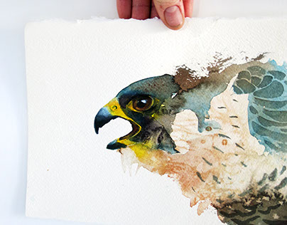 The Shout of the Peregrine falcon