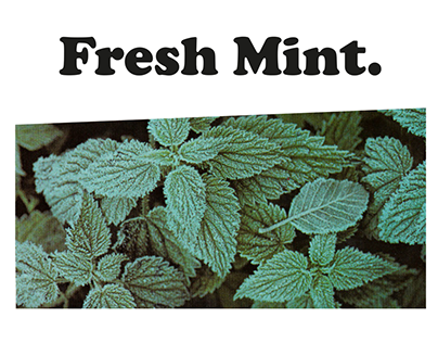 Publishing Fresh Mint.