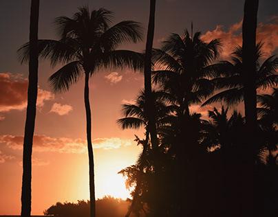C O N T E M P L A T I O N : mauritian atmosphere