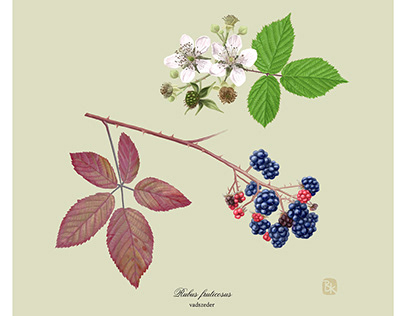 edible plants in nature