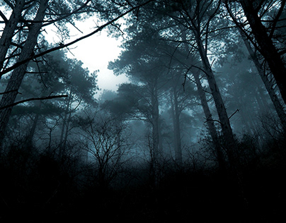 Morning at the dark forest
