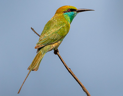 Okhla Bird Sanctuary 01 - 10th March 2021
