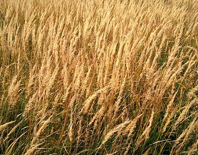 Autumn dry field