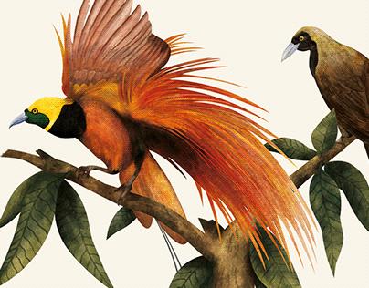 Všechno o pírku / All about Feather - Book