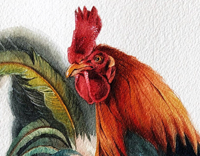 Red Junglefowl Watercolour Illustration