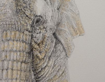 Pencil drawing and watercolor - Elder elephant