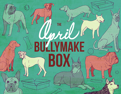 Bullymake Branding & Packaging